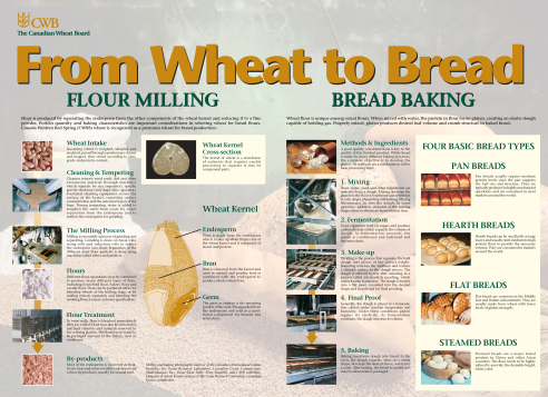 From Wheat To Bread Chart Courtesy Of The Canadian Board